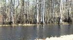 SC Swamp.jpg