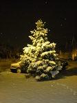 Snow 20090203.JPG